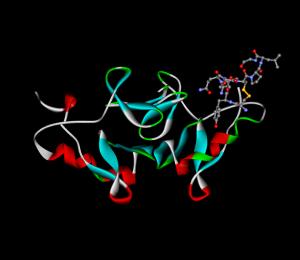 690px-Oxytocin-neurophysin
