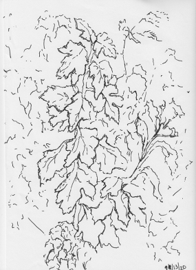 wim-drawing-1